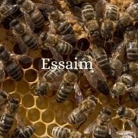 ESSAIMS