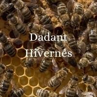 DADANT HIVERNES