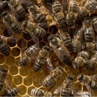 poster apiculture